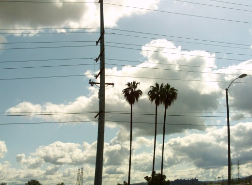 Three palm trees with clouds and telephone wires.