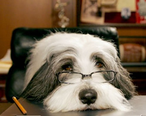 Adorable dog from the movie, Shaggy the Dog with Tim Allen.