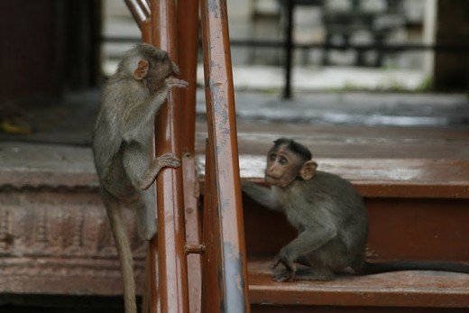 See the two monkeys in the pic. You have stop being like the one who is hiding behind the iron poles or being inferior, you have to be calm, polite, and lay down your thoughts clearly in front of others.