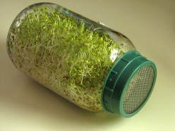 Health Benefits of Alfalfa Sprouts - Where to Buy Alfalfa Sprouts Online