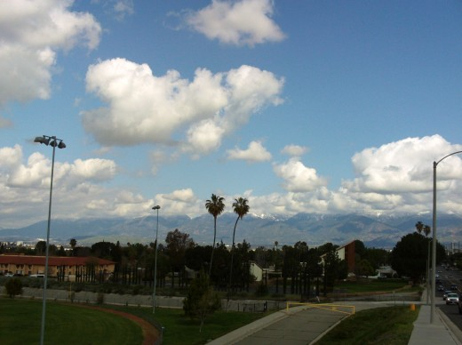 Two palm trees with the San Bernardino Mountains in the distance.