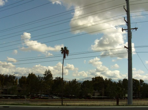 A solitary palm tree with a cloudy sky.