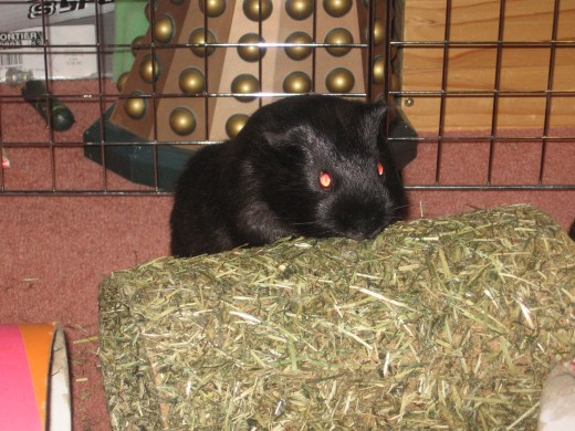 Snickers and the new hay tunnel.