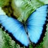 colca294cola profile image