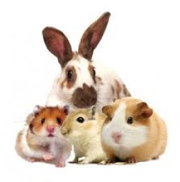 Rabbits, and Guinea pigs, and other well behaved animals.