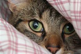 Rescue a Cat