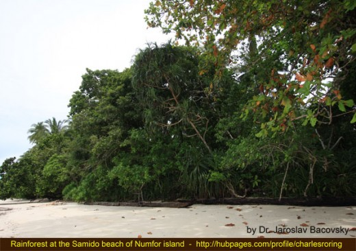 Rainforest picture from Samido beach of Numfor island in the North Coast of New Guinea