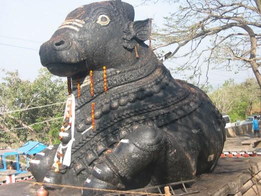 Nandi the bull is Shiva's mount. Nandi always worships Shiva.