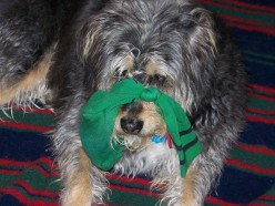 A Second Life for Dog Toys: Using Old Socks