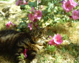 This is Harry Potter, doing what he enjoys most, that is relaxing in the shade under the bushes. You can see that in summer the grass is not very green due to the sun.