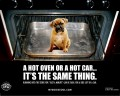 Dogs In Hot Cars Are Not Cool