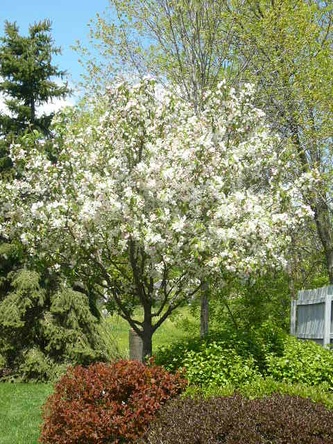 Planting the right trees and shrubs will provide birds with food, shelter, and places to rest.  This photo is from our yard in the early spring