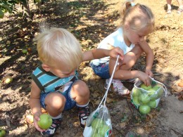 Our apple bounty.