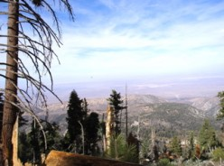 Looking out over the Mojave Desert.
