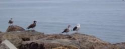 Oceanside inhabitants.