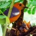 Birds as insect predators.