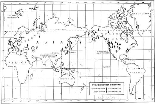 Redwoods around the world