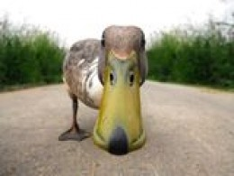 Stick your beak in and see what happens!