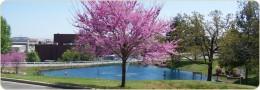 Treasure Lake in Spring time