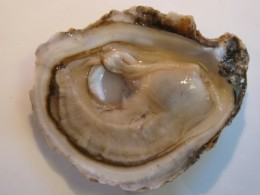A raw oyster on the half shell.