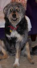 Sitting three-legged dog centers her front leg