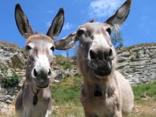 Mules.