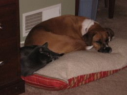 Dogs and Cats can cohabitate with time and patience and discipline