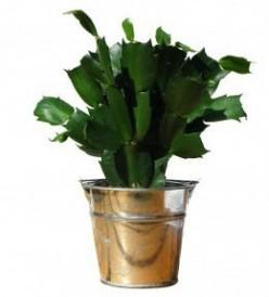 Repotting Houseplants
