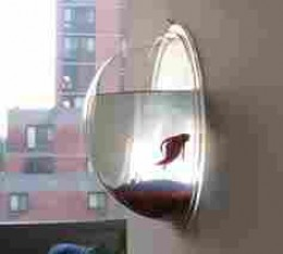 This is a hanging fish bowl.  The owner shuld be hanged!
