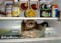 OUR CATS CAN GET ADDICTED TO THE CONTENTS OF THE REFRIGERATOR, JUST LIKE US!