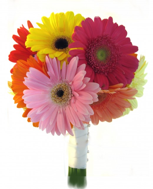 Bride's, colorful gerbera bouquet