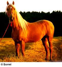 Beautiful Horse.