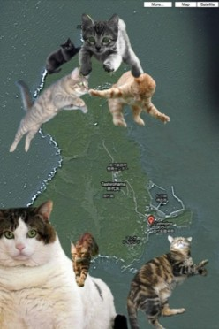 Cat Island, officially known as Tashiro Island is an island near Ishinomaki City in Miyagi Prefecture and yes, to answer your one burning question its covered in cats. Check out this Google Maps satellite view of the island.