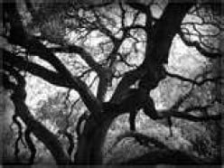 The Hanging Tree - Short Story - Fiction