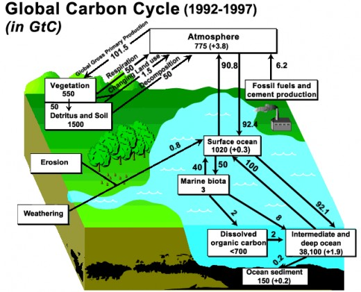This figure shows a generalized schematic of the Carbon Cycle