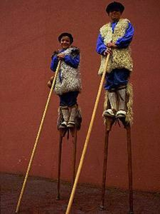 "Shepherds in the area accustomed to watching over their flocks on stilts (around 1.40m) called ""Echasses""."