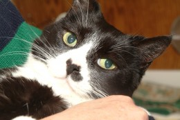 Holding a (friendly) cat helps reduce high blood pressure.
