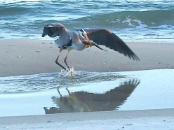 St. George Island State Park - Surf Fishing on the Florida Panhandle