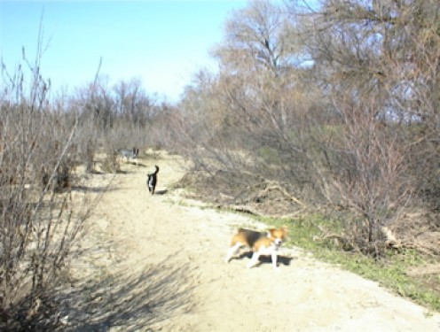 People often bring their dogs down to play in the Salinas riverbed.