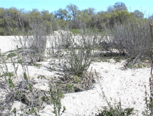 Dry Salinas Riverbed in Paso Robles from Lawrence Moore Park