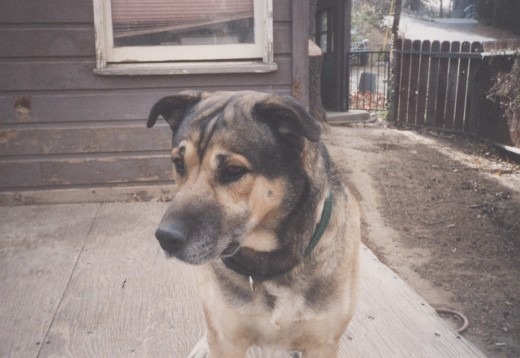 This is a photograph I took of Buster back in 2002.