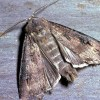 How can I get rid of the moths that are swarming around my front and back patio?