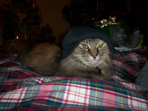 My kitty Koloa, whom we saved (yes, she's wearing a beanie)