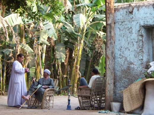 A man enjoys tea and a sheesha among the tall trees on Banana Island, Luxor, Egypt