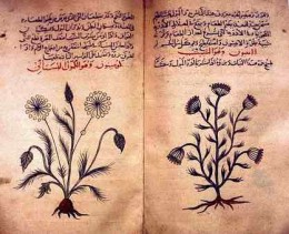 Arabic herbal medicine guide circa 1334.