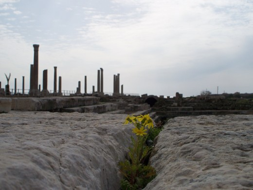 One of the few signs of life at the ruins of the once glorious city of Tyre, Lebanon