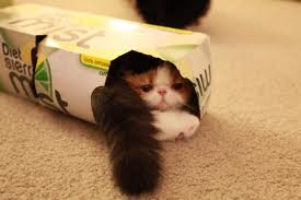 """THEY SQUEEZE  INTO SODA BOXES  """"I told you I could fit!"""""""