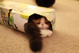 "THEY SQUEEZE  INTO SODA BOXES  ""I told you I could fit!"""