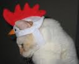 "THEY TRY ON HATS  ""I think this rooster look is really going to catch on..."""