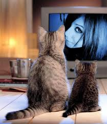 """THEY WATCH TRASH TV """"That Cecily is so catty...I like her!"""""""